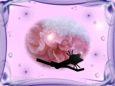 Cat Kittycat Ice Rose wallpaper