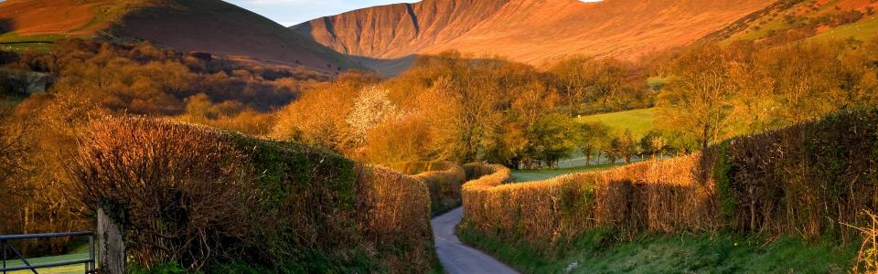 Trees, road, mountains, Brecon Beacons, Wales, UK wallpaper
