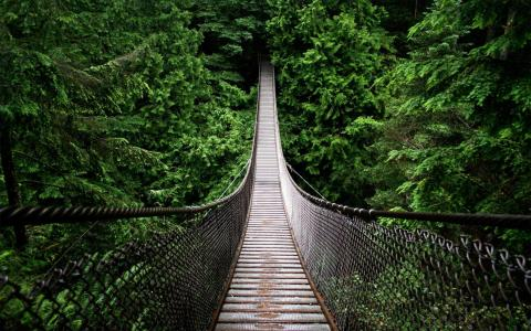 hanged_bridge_in_the_jungle-wide壁纸