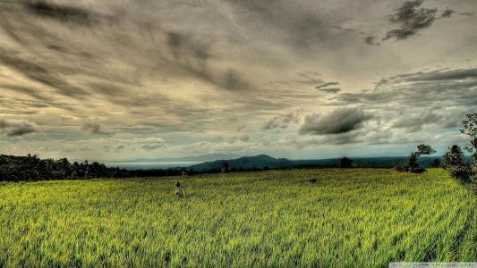 Rice Field Hdr壁纸